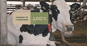 Empresa de laticínios desenvolve app para monitorizar o bem-estar das suas vacas
